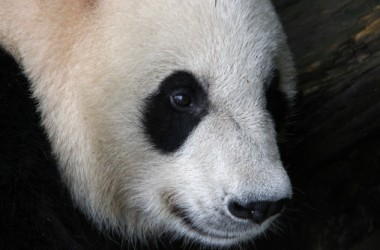 Search Marketing: Latest Google Panda Update