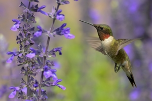 Even with Hummingbird, it's vital for companies to produce quality content.