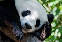 Google has once again updated Panda, affecting any and all search engine marketing tactics.